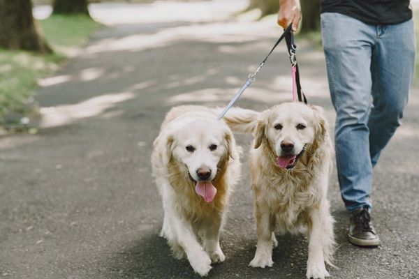 HCDM 53 Ernie Ward | Veterinary Medicine